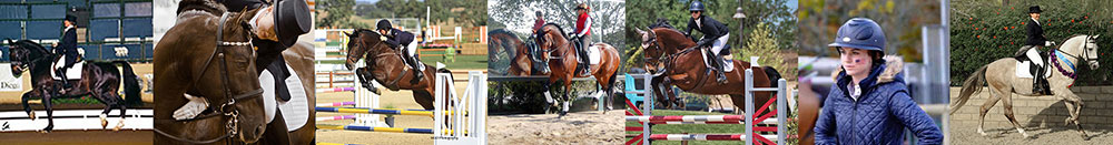 Templeton Farms Equestrian - Sporthorse - Breeding, Training and Sales